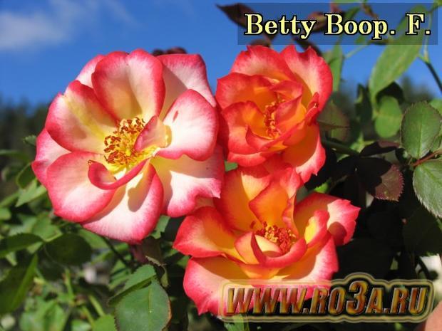 Роза Betty Boop Бетти Буп